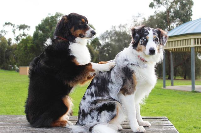 drbání psa