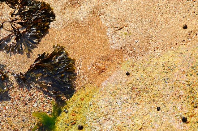 řasy na mořském pobřeží